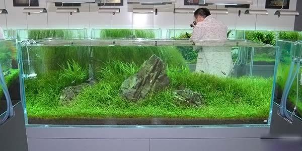 Фото № 63 Японский аквариум Такаши Амано 90 фото