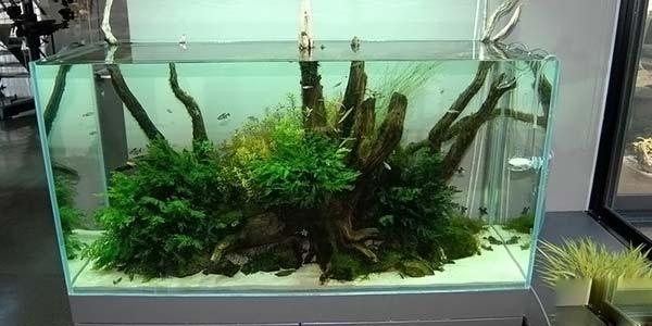 Фото № 64 Японский аквариум Такаши Амано 90 фото