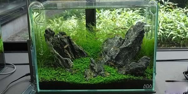 Фото № 65 Японский аквариум Такаши Амано 90 фото