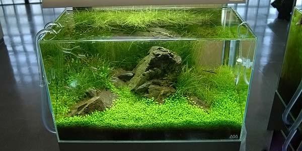 Фото № 66 Японский аквариум Такаши Амано 90 фото