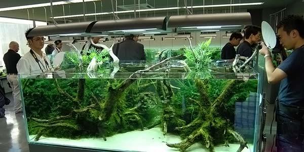 Фото № 67 Японский аквариум Такаши Амано 90 фото