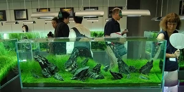 Фото № 68 Японский аквариум Такаши Амано 90 фото