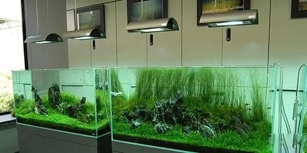 Фото № 69 Японский аквариум Такаши Амано 90 фото