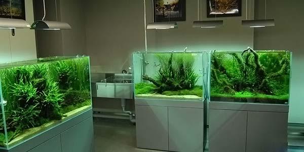 Фото № 70 Японский аквариум Такаши Амано 90 фото