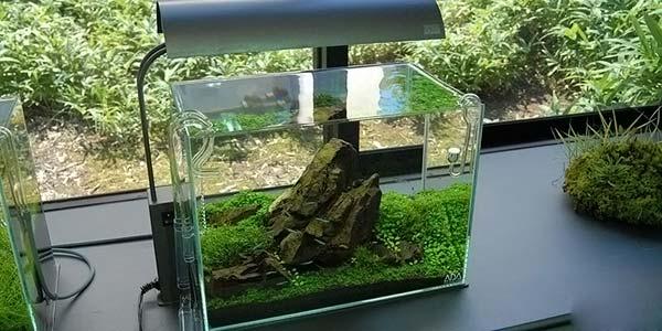 Фото № 71 Японский аквариум Такаши Амано 90 фото