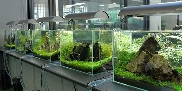 Фото № 72 Японский аквариум Такаши Амано 90 фото