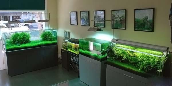 Фото № 73 Японский аквариум Такаши Амано 90 фото