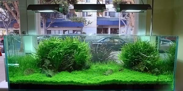 Фото № 75 Японский аквариум Такаши Амано 90 фото