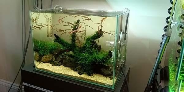 Фото № 76 Японский аквариум Такаши Амано 90 фото