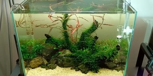 Фото № 77 Японский аквариум Такаши Амано 90 фото