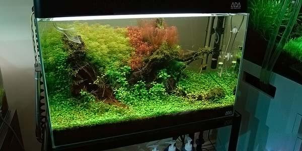 Фото № 78 Японский аквариум Такаши Амано 90 фото