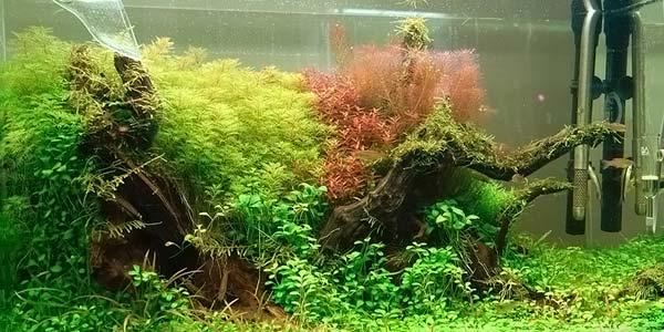 Фото № 79 Японский аквариум Такаши Амано 90 фото