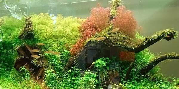 Фото № 80 Японский аквариум Такаши Амано 90 фото