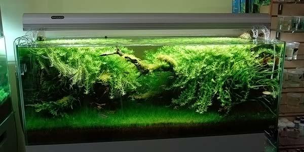 Фото № 83 Японский аквариум Такаши Амано 90 фото