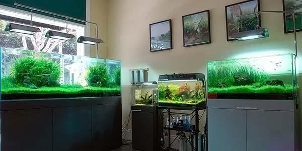Фото № 84 Японский аквариум Такаши Амано 90 фото