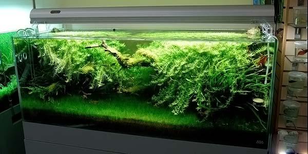 Фото № 85 Японский аквариум Такаши Амано 90 фото
