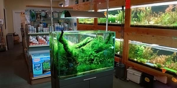Фото № 86 Японский аквариум Такаши Амано 90 фото