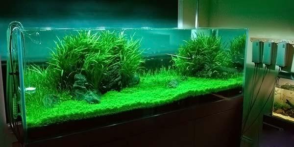 Фото № 88 Японский аквариум Такаши Амано 90 фото