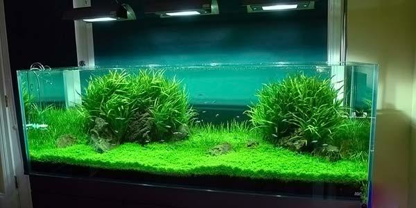 Фото № 89 Японский аквариум Такаши Амано 90 фото
